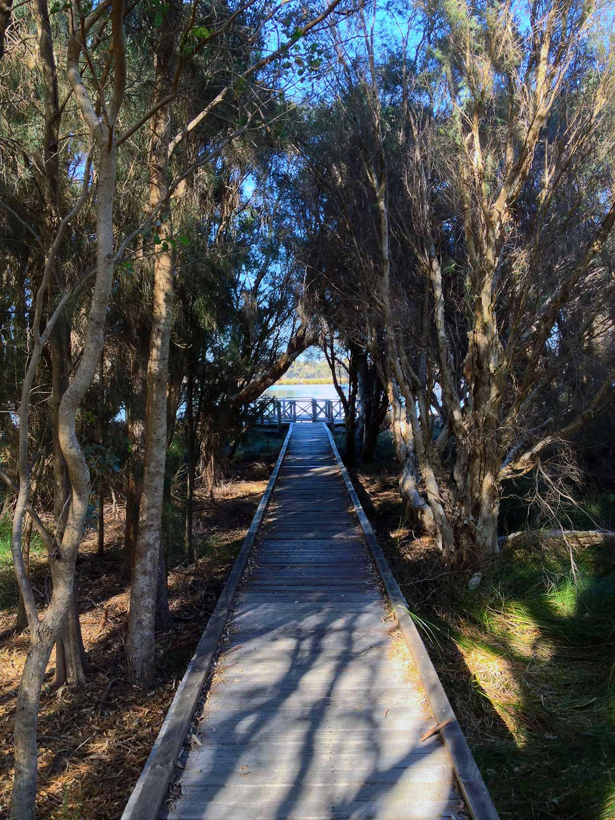 A boardwalk within the Baigup Wetlands of the Swan River, Perth, Western Australia