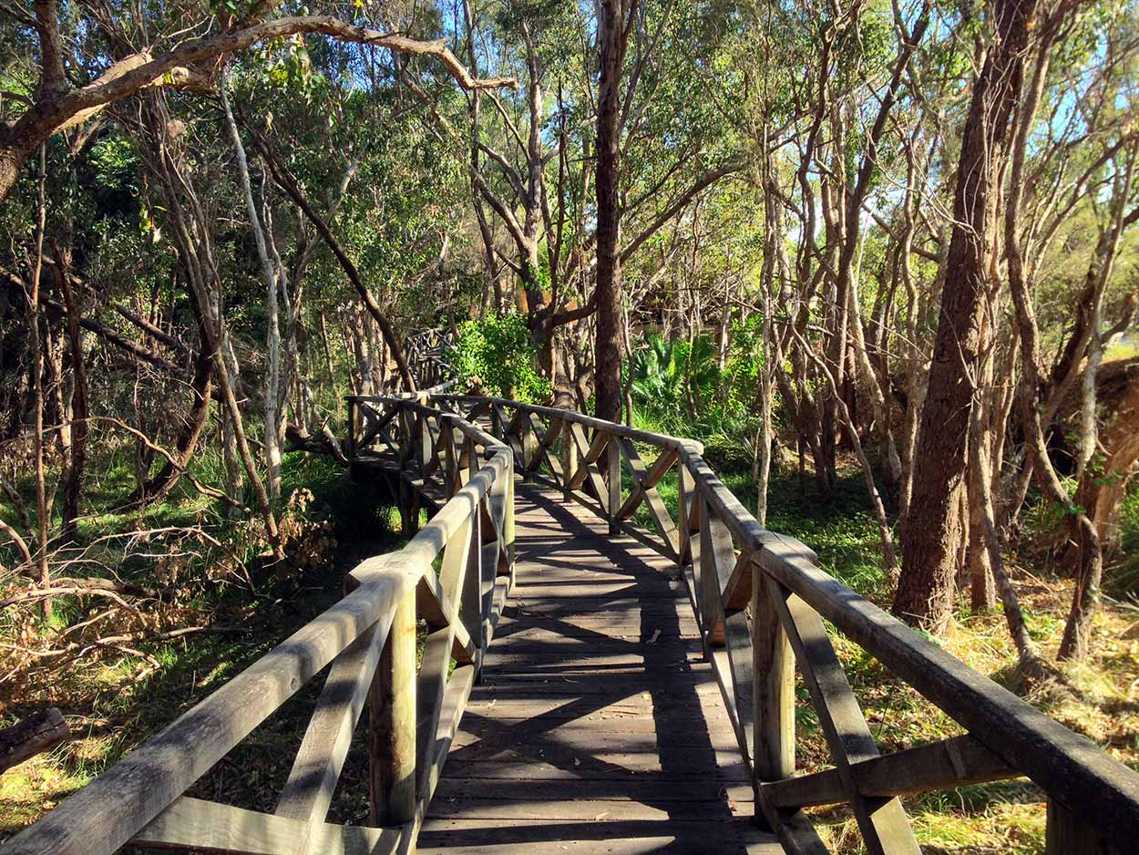 A boardwalk amongst the trees of Garratt Road Bridge Park on the banks of the Swan River, Perth, Western Australia