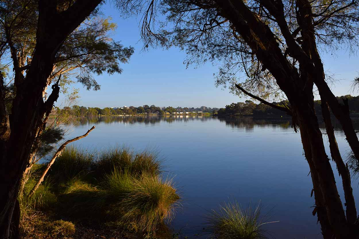 Peering through the trees on the Rivervale bank of the Swan River, Swan River, Perth, Western Australia