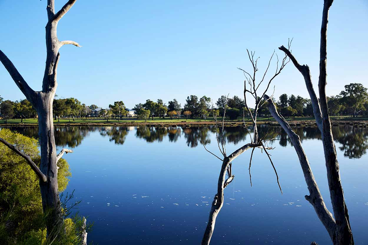 Peering through the lifeless trees to the Maylands Foreshore Reserve on the other side of the Swan River, Perth, Western Australia