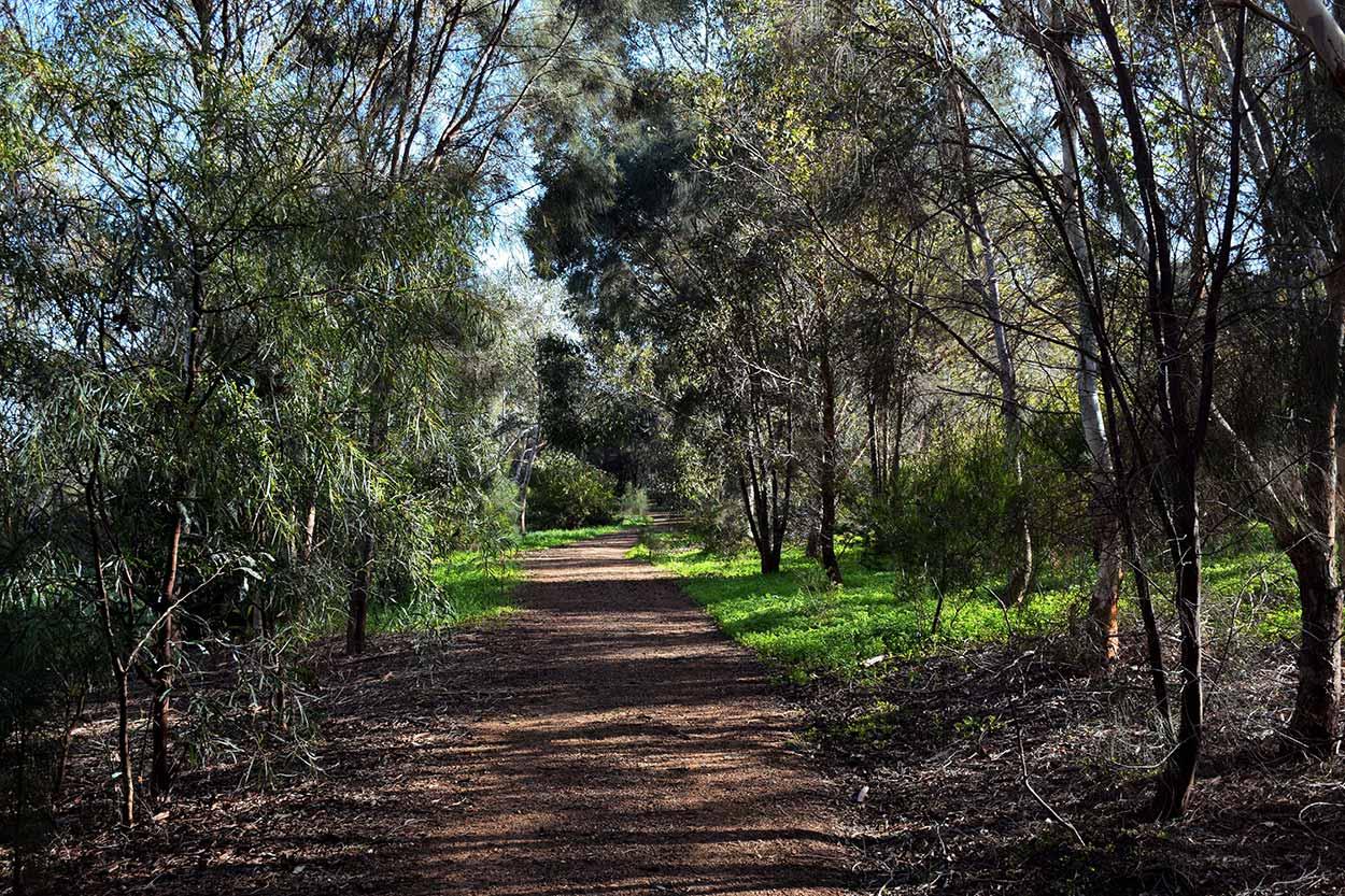The path through bushland on the southern side of Black Swan Island, Perth, Western Australia