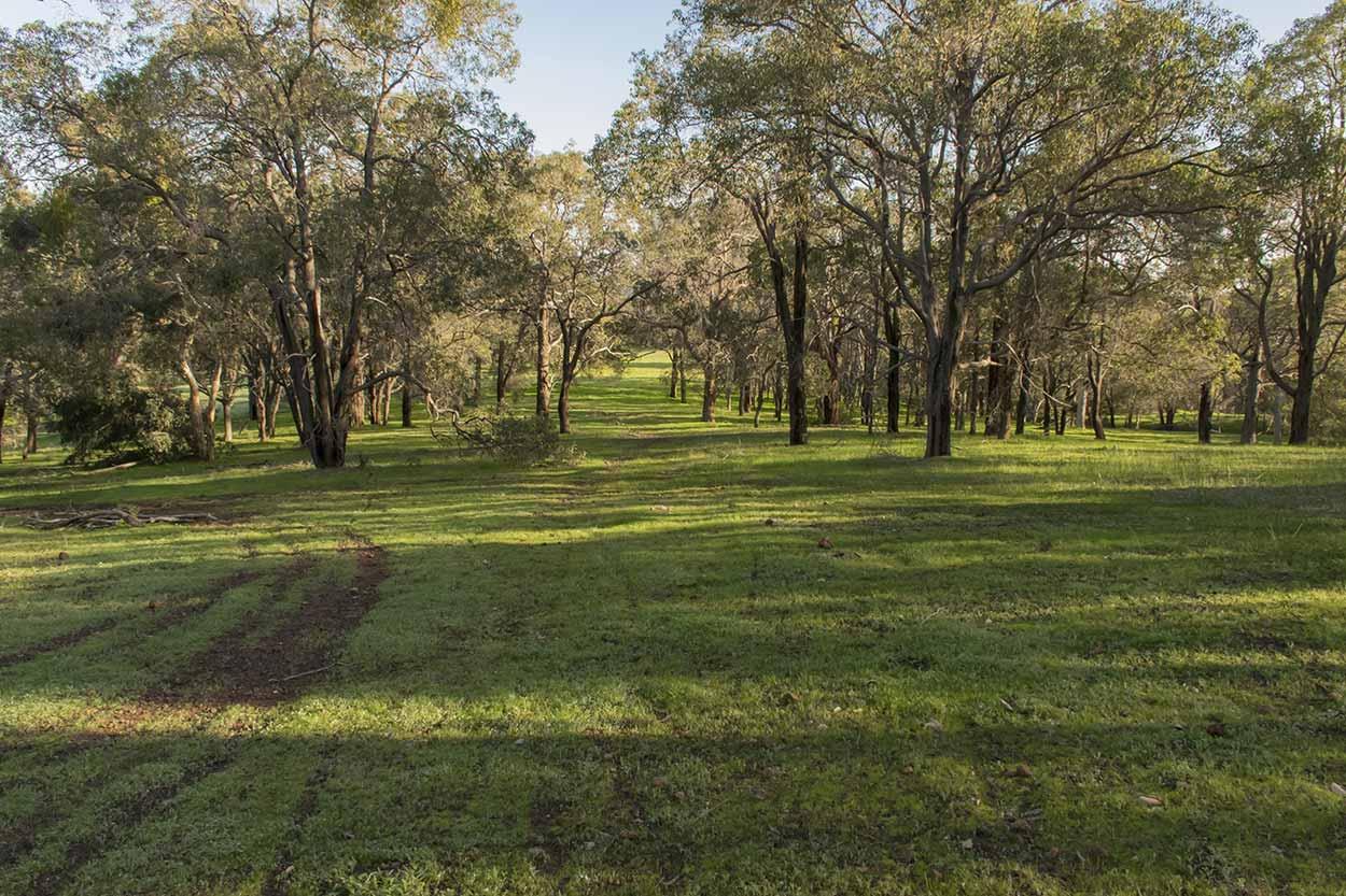 Parkland, Wungong Regional Park, Perth, Western Australia