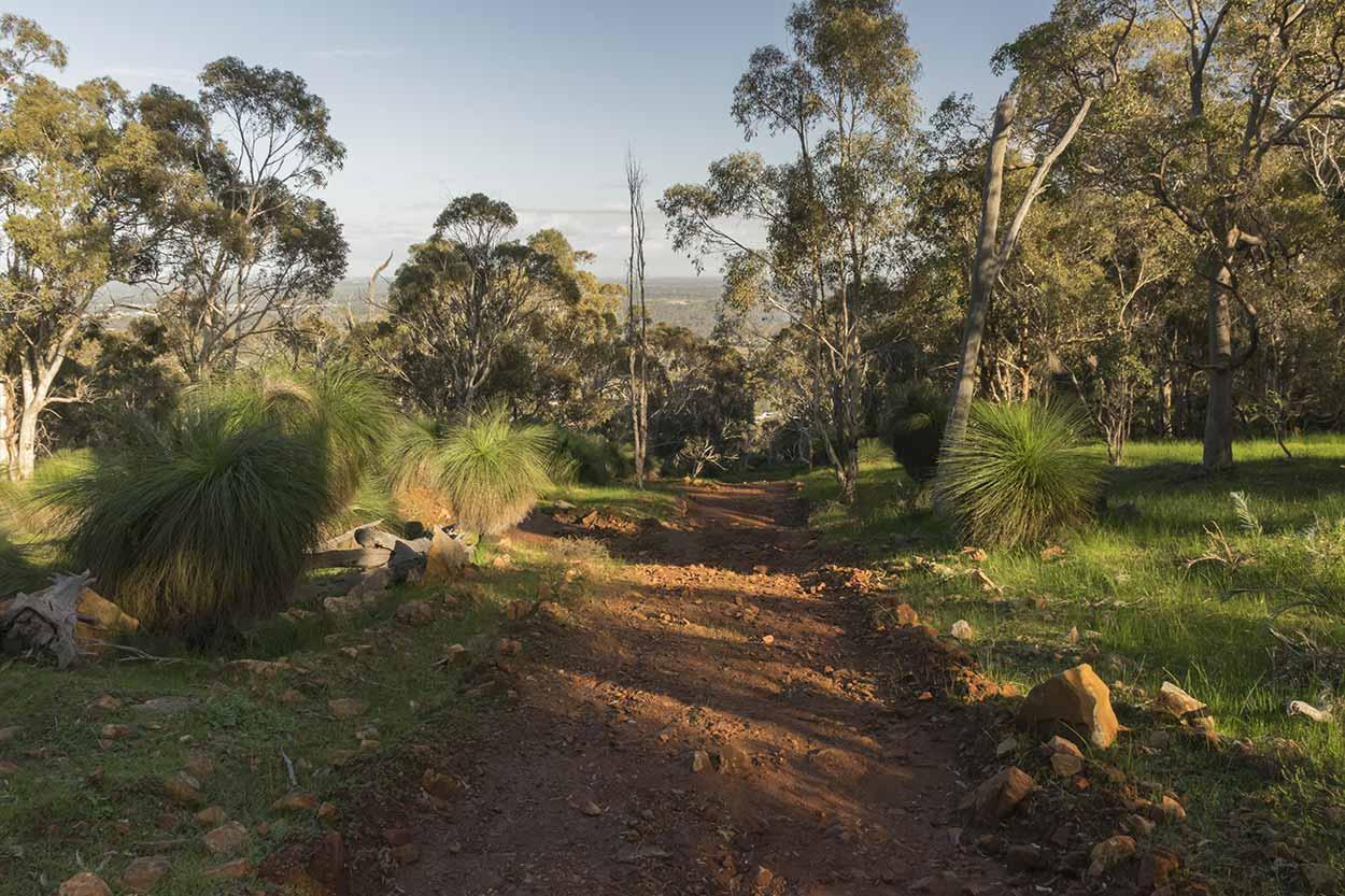 Path in Wungong Regional Park, Perth, Western Australia