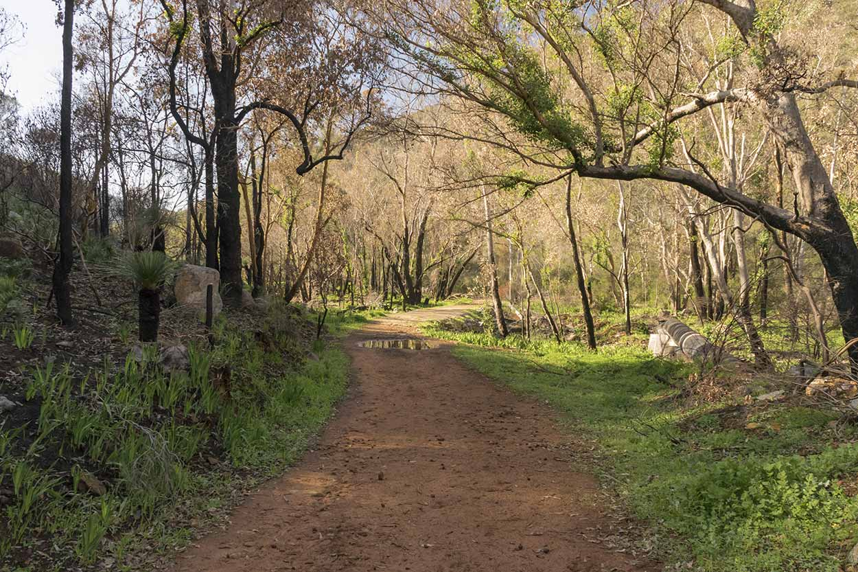 Bushland in Wungong Regional Park, Perth, Western Australia