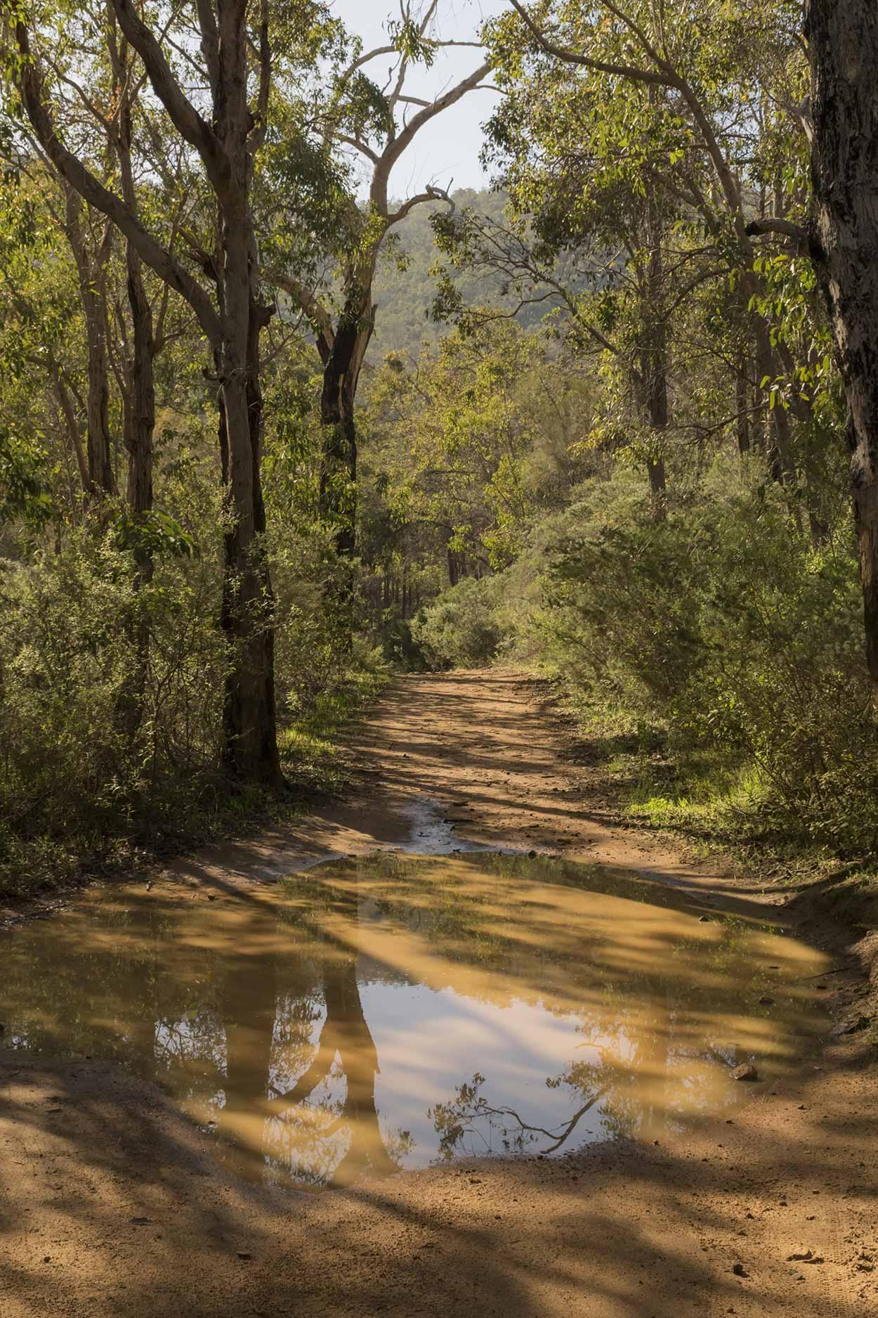 A muddy path in Wungong Gorge, Wungong Regional Park, Perth, Western Australia