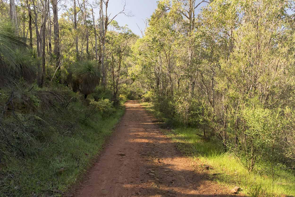 Bush track in Wungong Gorge, Wungong Regional Park, Perth, Western Australia