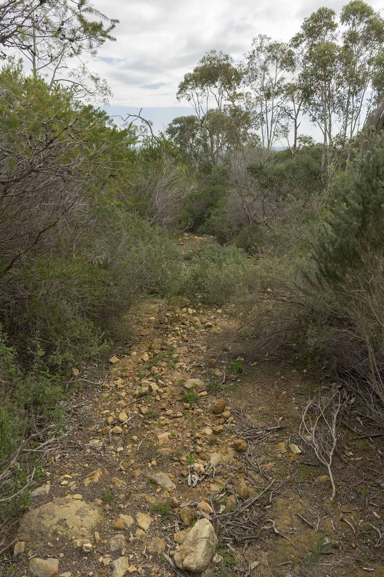 Overgrown path in Wungong Regional Park, Perth, Western Australia