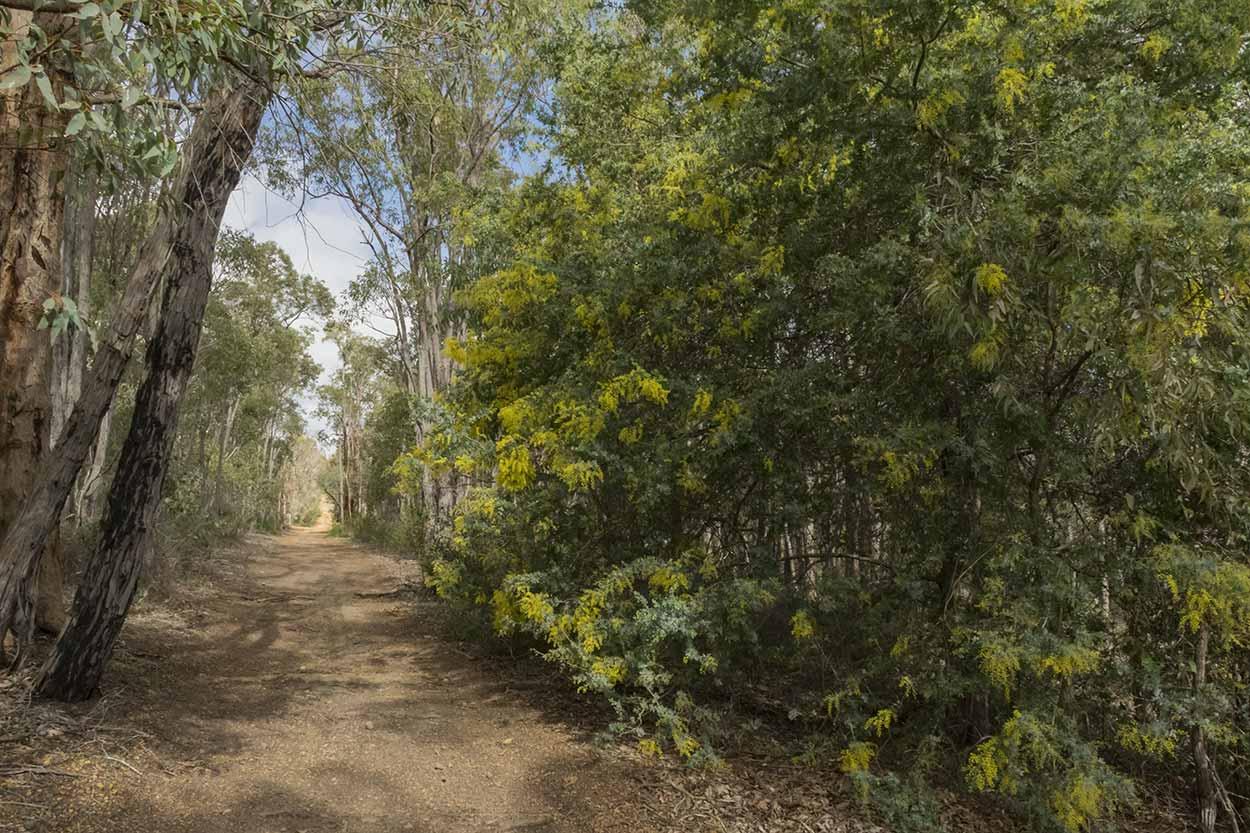 Bushland path in Wungong Regional Park, Perth, Western Australia