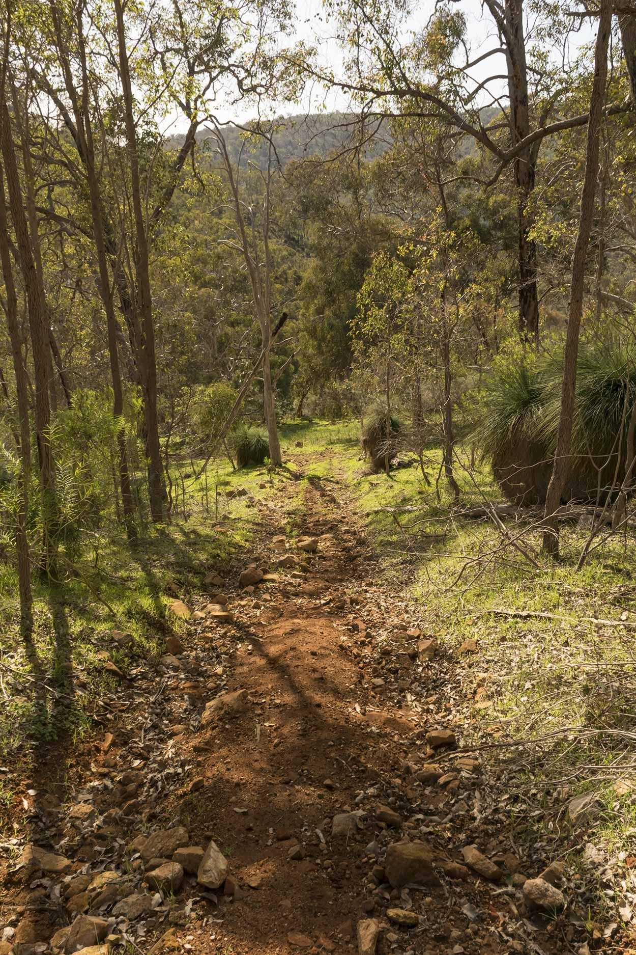 Steep path in Wungong Regional Park, Perth, Western Australia