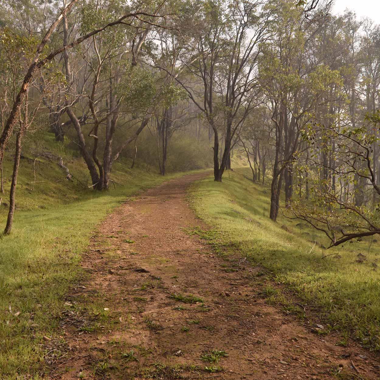 Smoky bushland, Wungong Regional Park, Perth, Western Australia