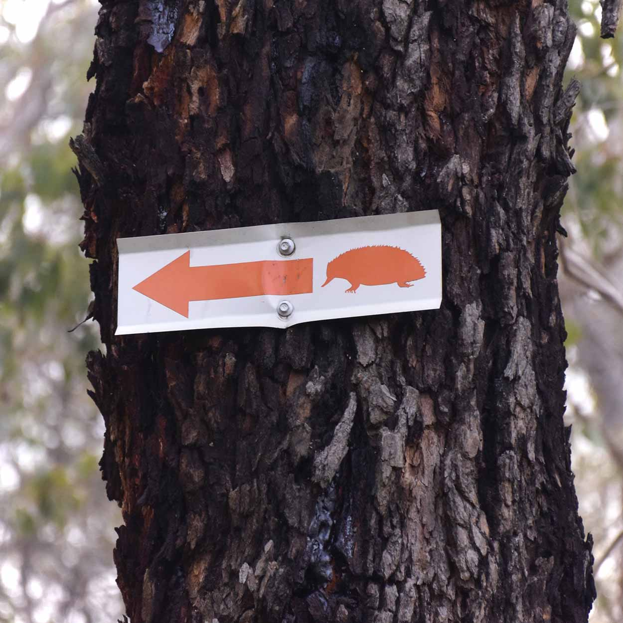 Trail marker for the Echindna Trail, Wungong Regional Park, Perth, Western Australia