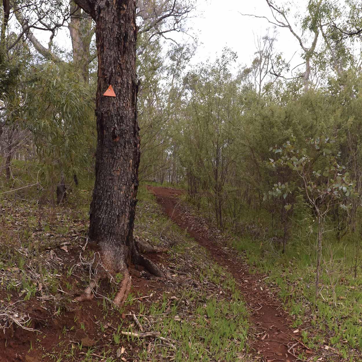 Echindna Trail, Wungong Regional Park, Perth, Western Australia