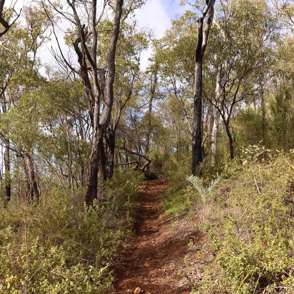 Hiking the Echidna Trail, Wungong Regional Park, Perth, Western Australia