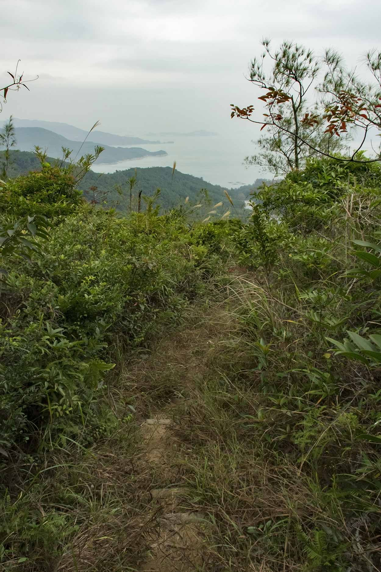 Over grown path, Chi Ma Wan Country Trail, Lantau Island, Hong Kong, China