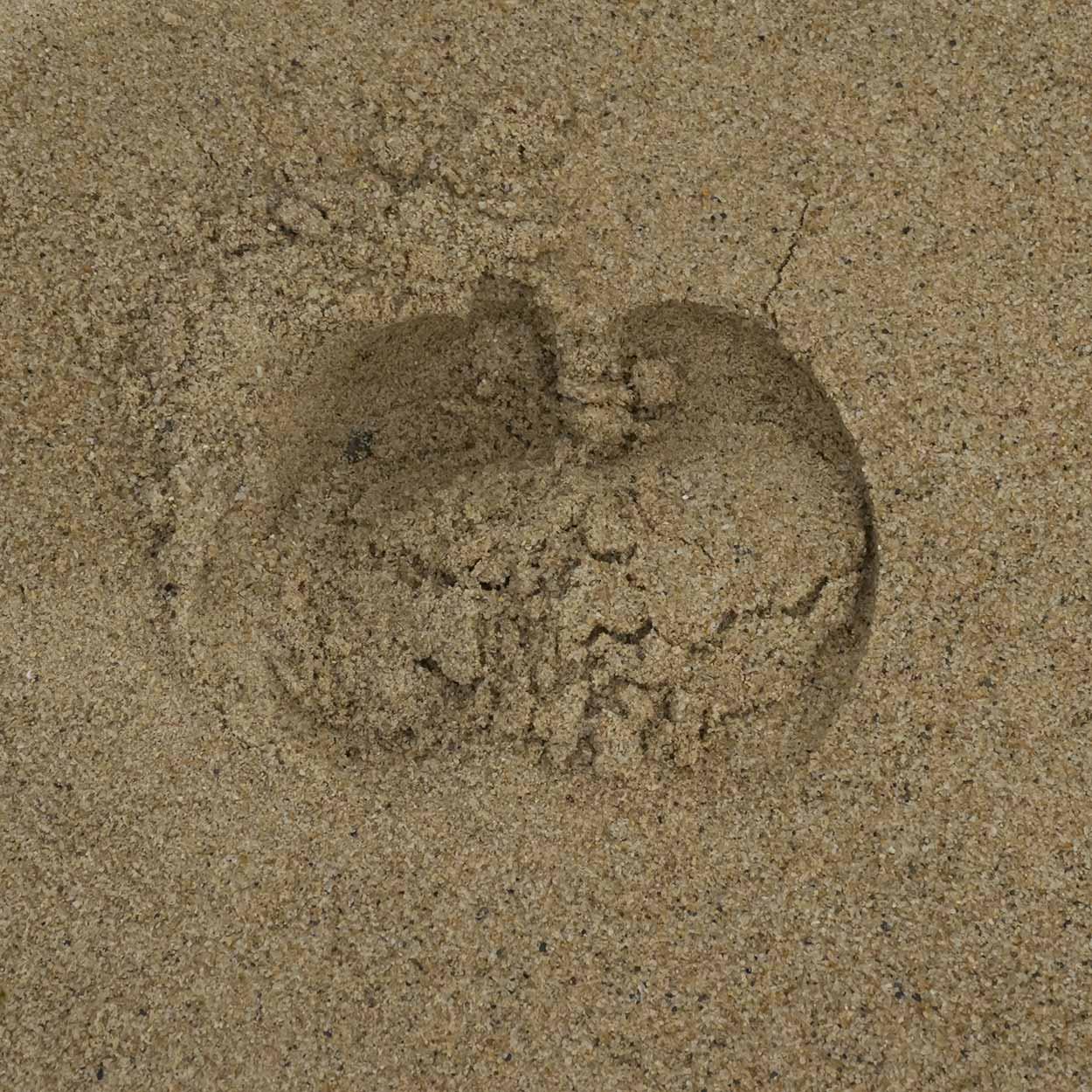 Water buffalo foot print in the sand, Chi Ma Wan Country Trail, Lantau Island, Hong Kong, China