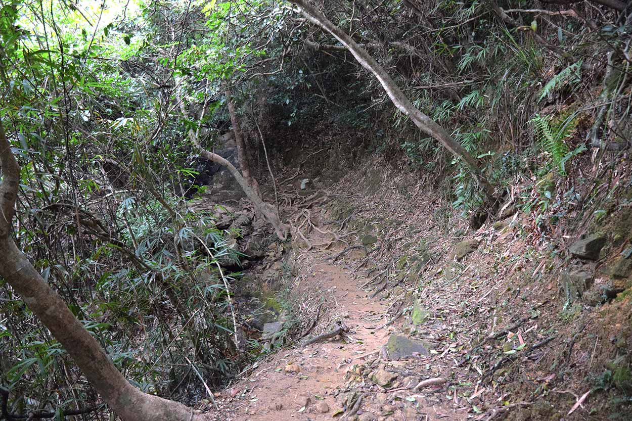 Trail in the Vegetation, Hong Kong Trail Section 8, China