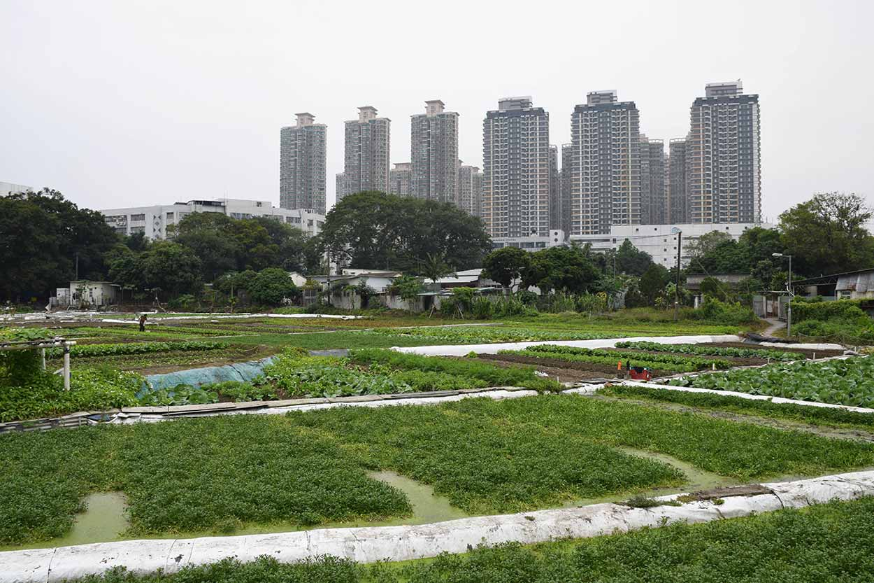 Urban farming, Lung Yeuk Tau Heritage Trail, Hong Kong, China