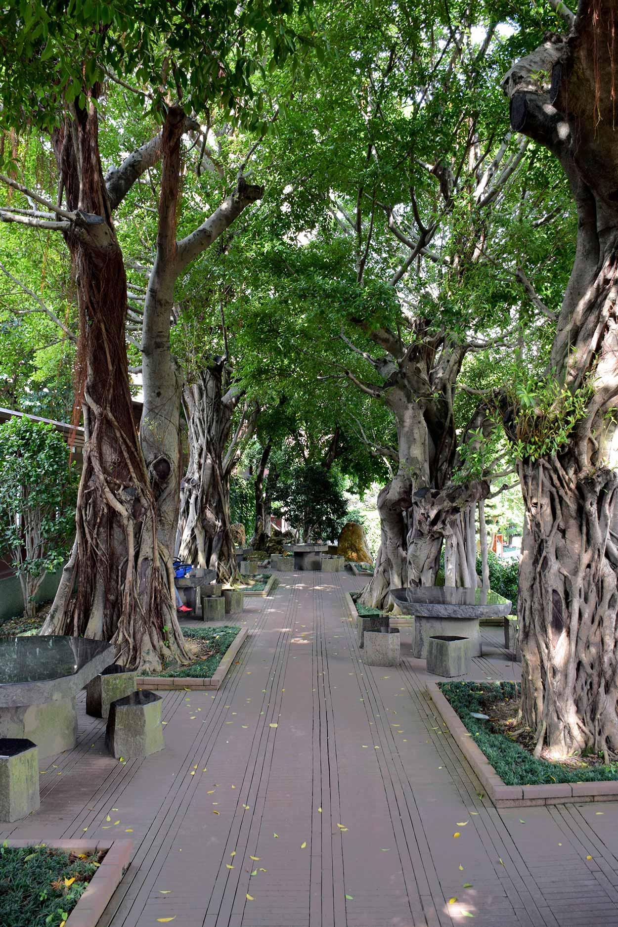 Banyan Grove, Nan Lian Garden, Hong Kong, China