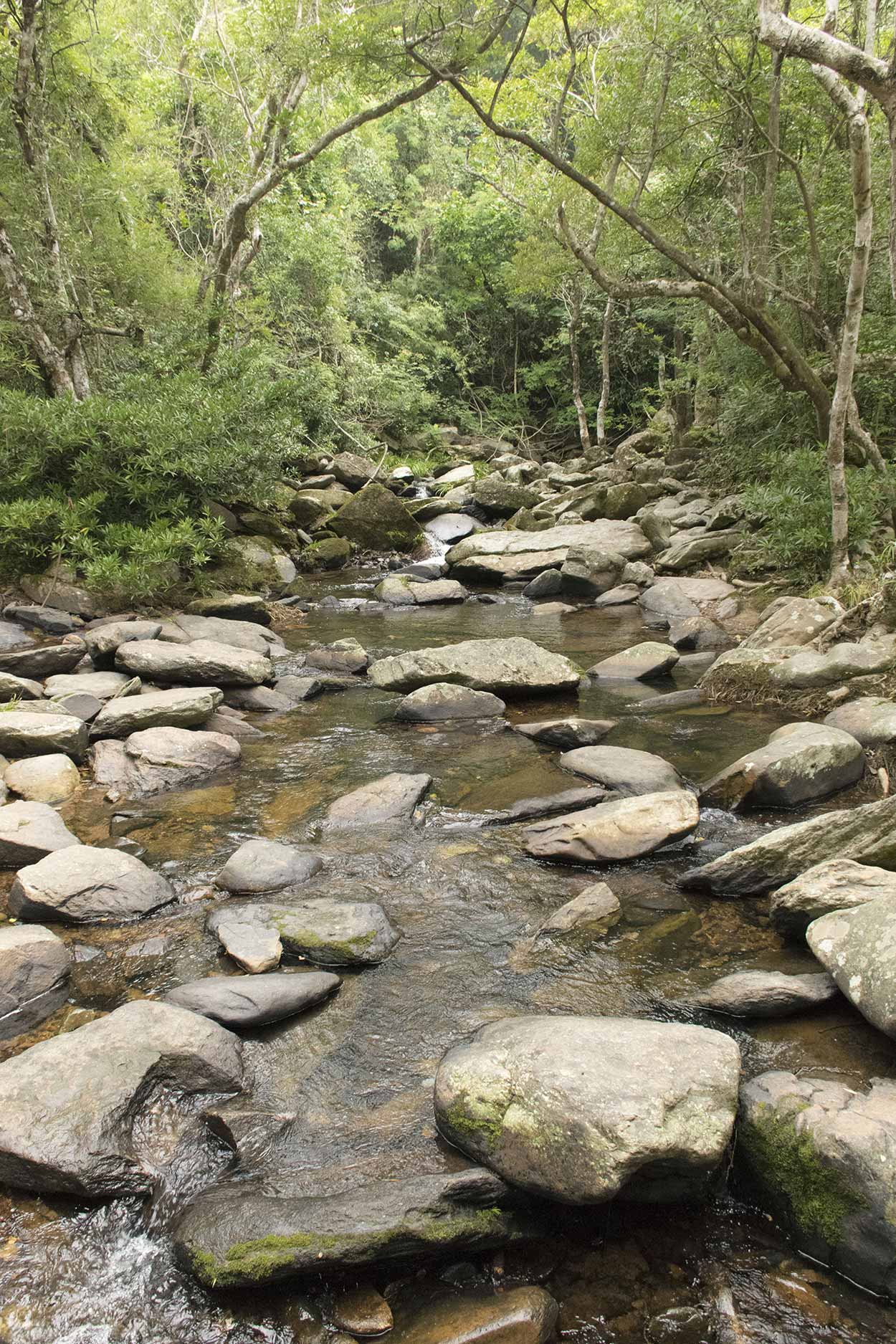 Brides Pool stream, Plover Cove Reservoir Country Trail, Hong Kong, China