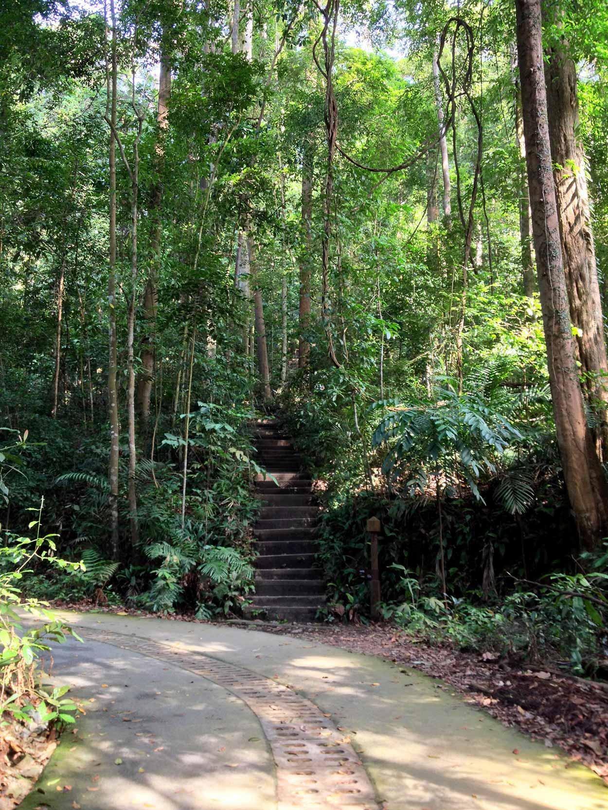 Up those stairs to the summit of Singapore, Bukit Timah, Singapore