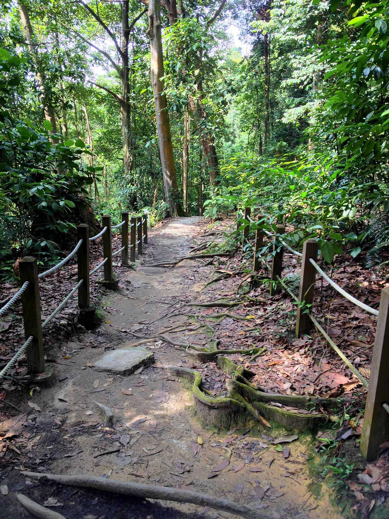 A path through the jungle, Bukit Timah, Singapore