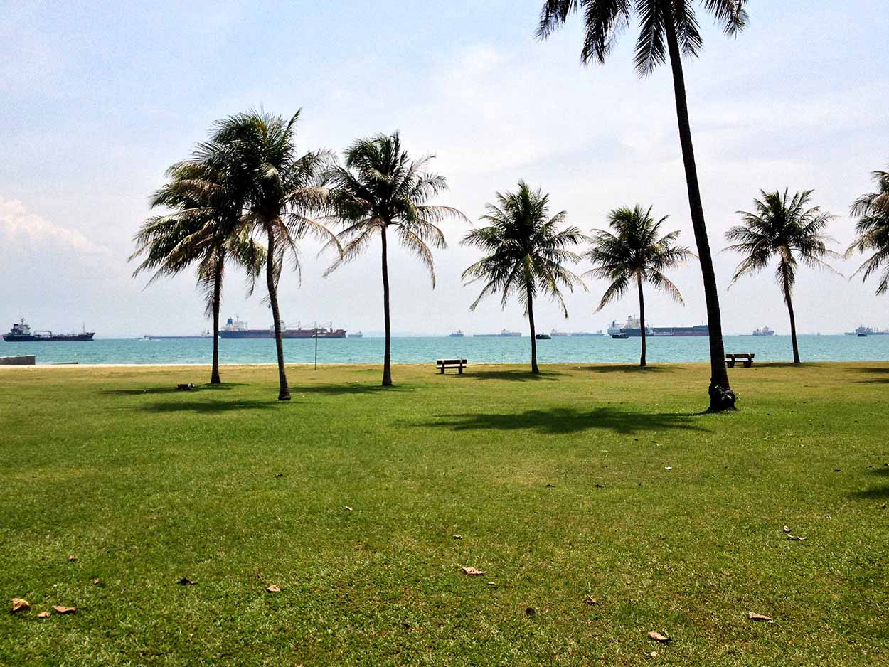 Palm trees and the blue waters of Singapore Strait, East Coast Park, Singapore