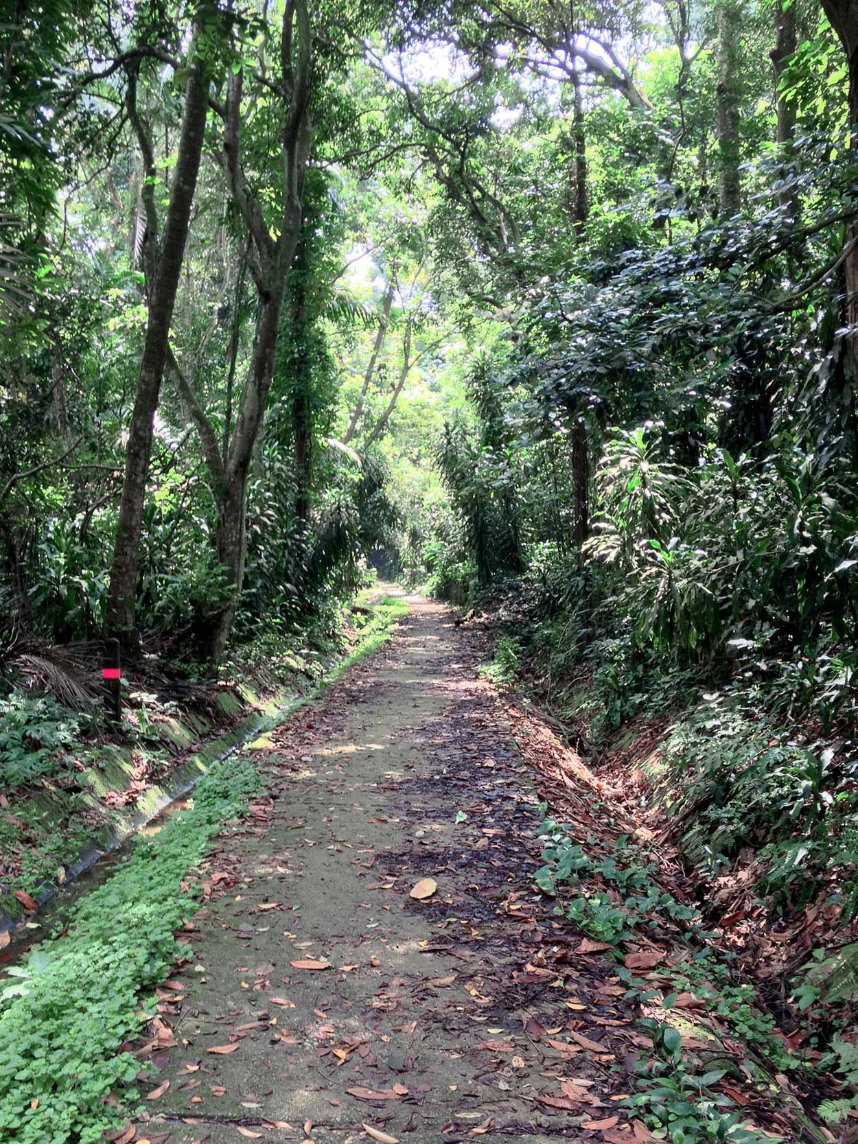 The view along the Pandan Trail, Kampong Trail, Singapore