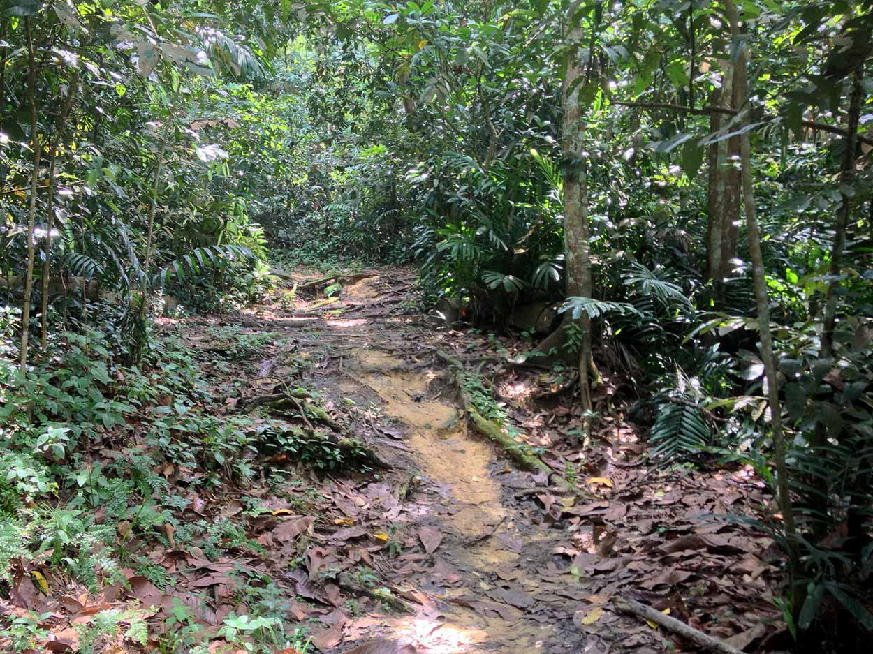 A little muddy along the Rifle Range Trail, Kampong Trail, Singapore