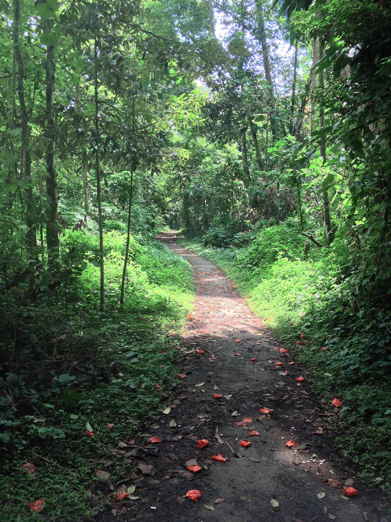 Jungle along the Nangka Trail, Kampong Trail, Singapore