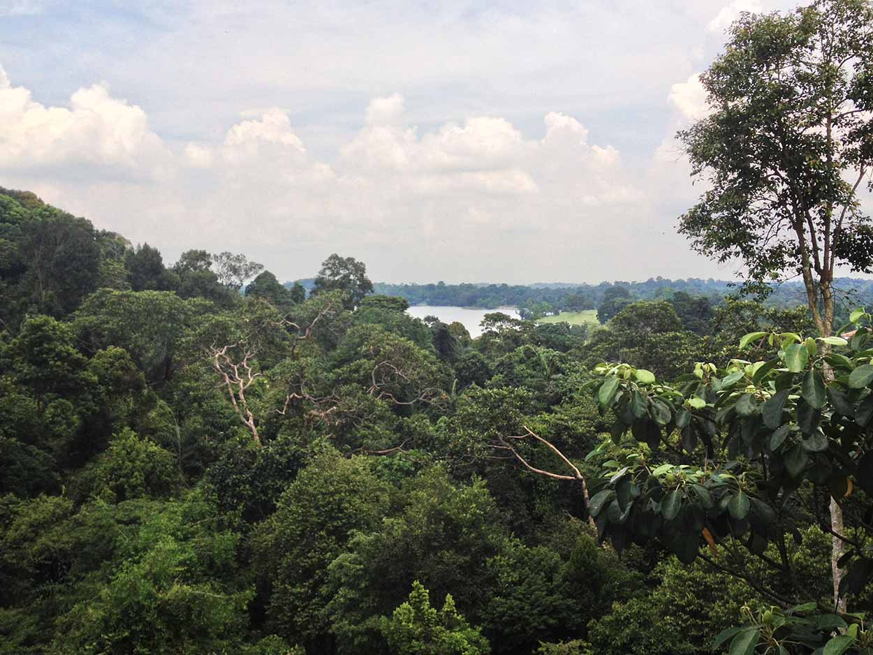 View from the TreeTop Walk, MacRitchie Reservoir Nature Reserve, Singapore