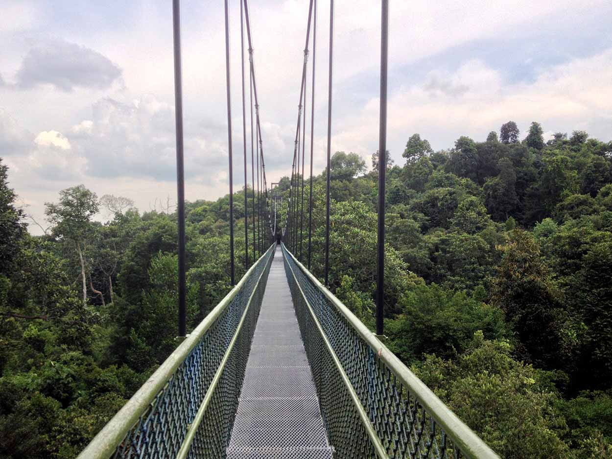 TreeTop Walk, MacRitchie Reservoir Nature Reserve, Singapore