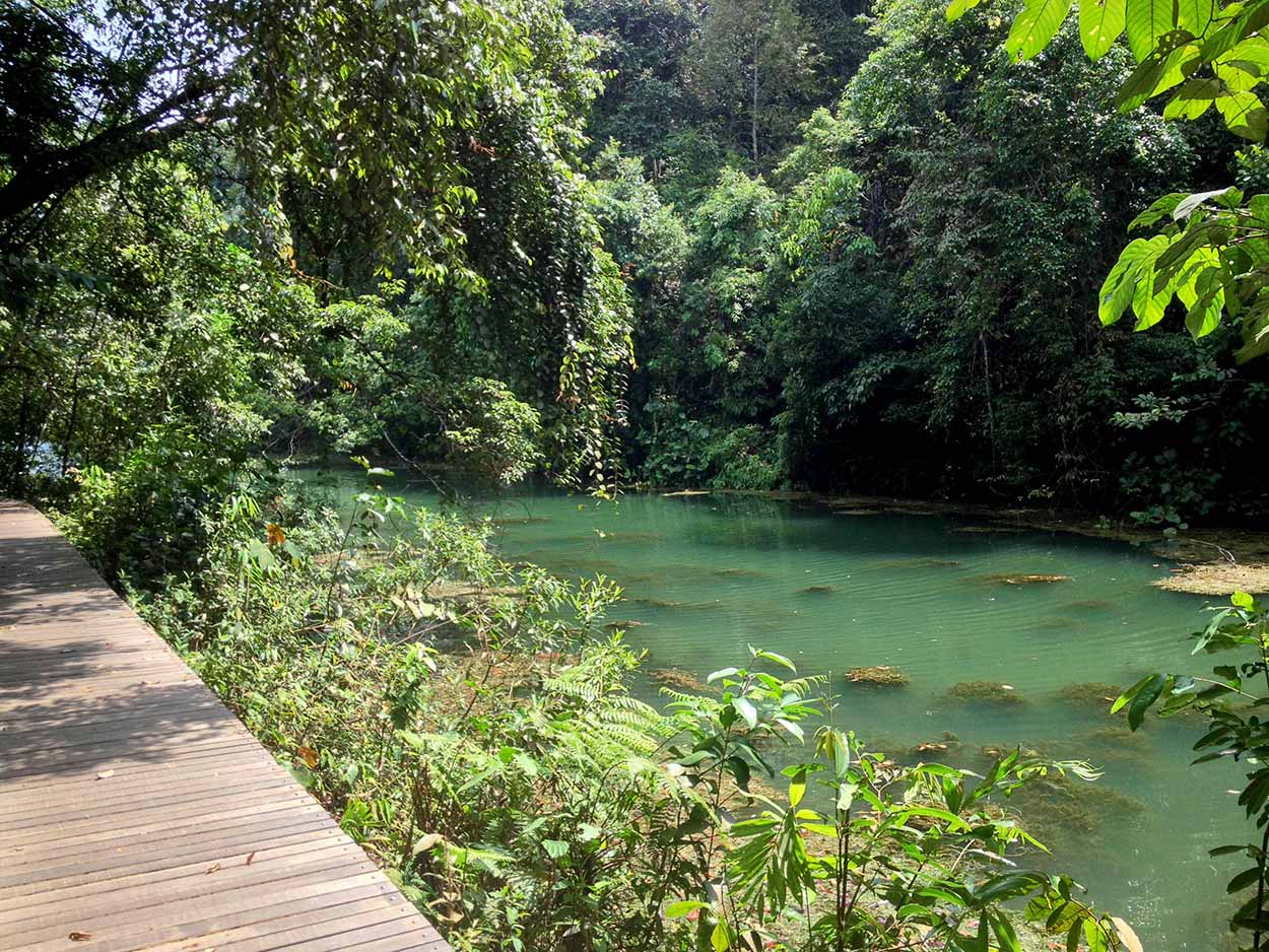 Petai Trail, MacRitchie Reservoir Nature Reserve, Singapore