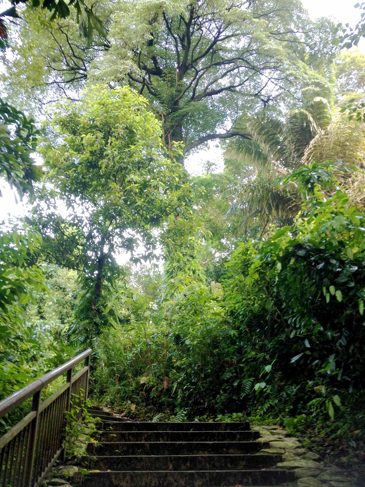Climbing Mount Faber via the stairs of the Marang Trail, Southern Ridges Walk, Singapore