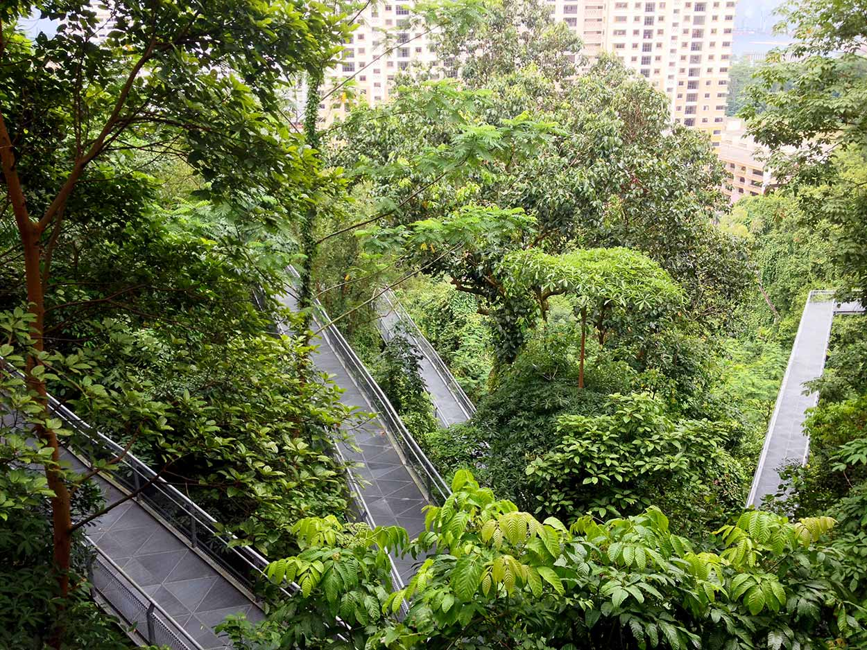 Walking the heights of the Forest Walk, Southern Ridges Walk, Singapore