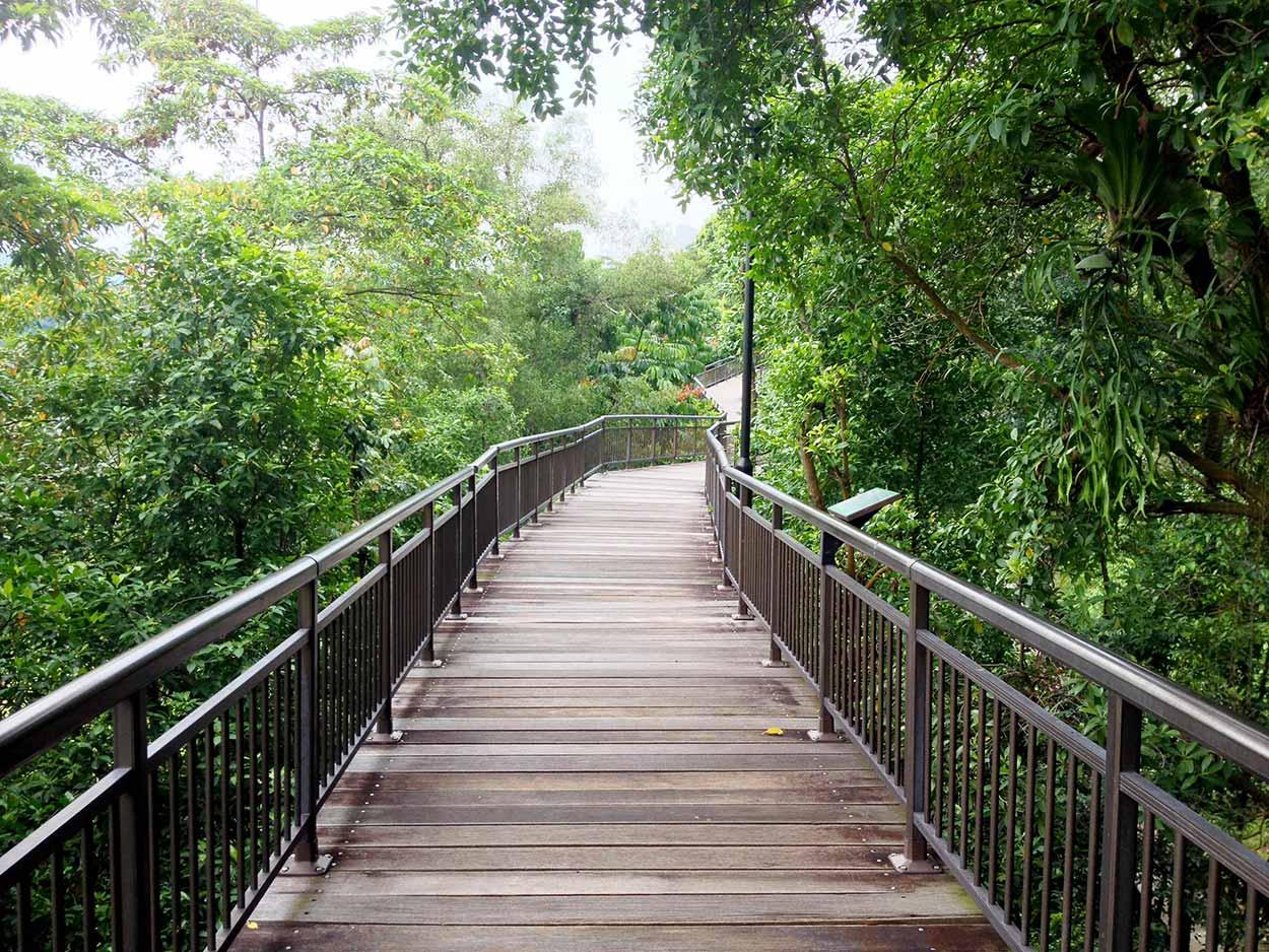 The Canopy Walk in Kent Ridge Park, Southern Ridges Walk, Singapore